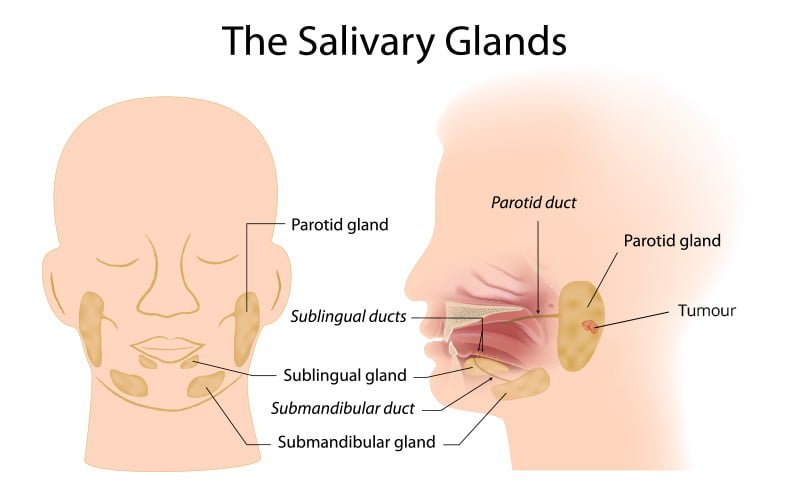 Beacon Hospital Best Salivary Glands Thyroid Cancer Treatment